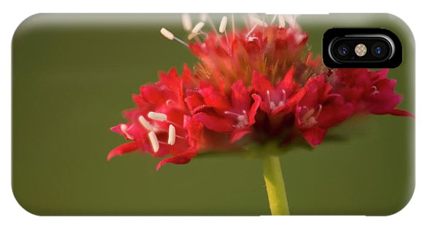 Hybrid iPhone Case - Pincushion Flower (scabiosa Caucasica) by Maria Mosolova/science Photo Library