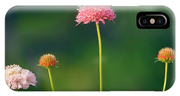 Hybrid iPhone Case - Pincushion Flowers (scabiosa Caucasica) by Maria Mosolova/science Photo Library