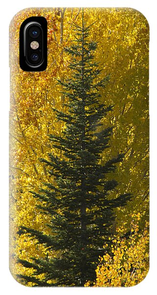Pine In Aspens IPhone Case