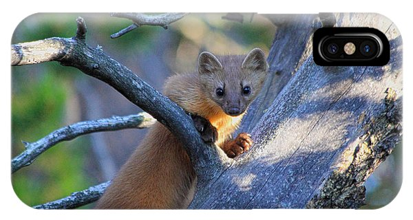 Pine Martin IPhone Case