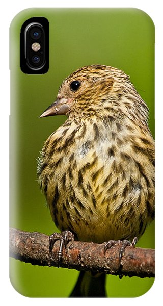 Pine Siskin With Yellow Coloration IPhone Case