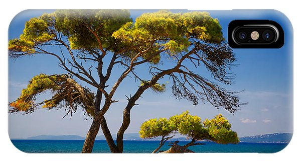 Umbrella Pine iPhone Case - Pine Trees By The Beach by Gabriela Insuratelu