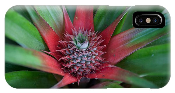 Pineapple Development IPhone Case