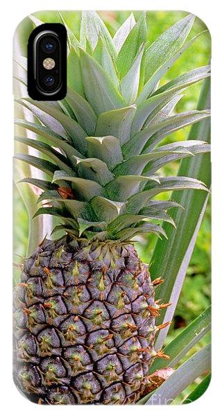 Pineapple Plant IPhone Case