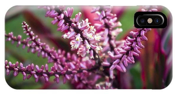 Far North Queensland iPhone Case - Pink And Cream Cluster Bloom by Kerryn Madsen-Pietsch
