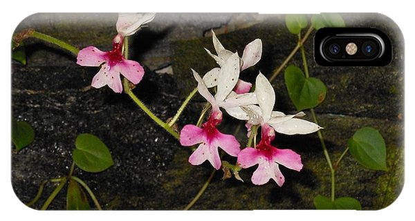 Pink And White Orchids IPhone Case