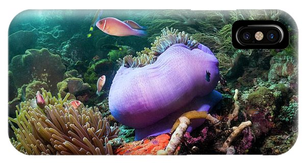 Ichthyology iPhone Case - Pink Anemonefish With Magnificent Anemone by Georgette Douwma