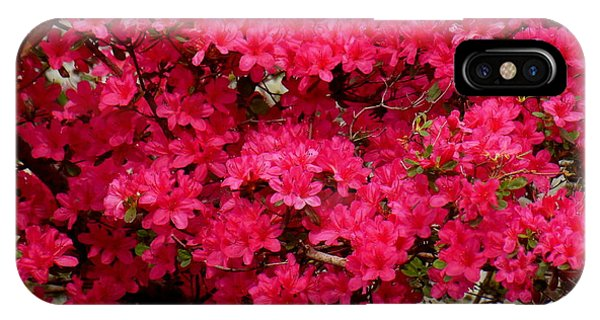 Pink Azaleas Phone Case by Virginia Forbes