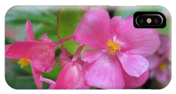 Pink Begonias IPhone Case