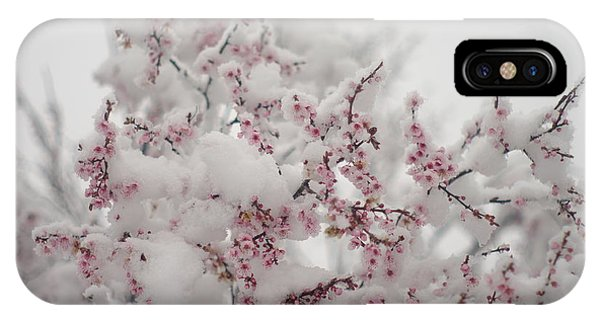 Pink Spring Blossoms In The Snow IPhone Case