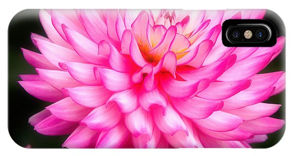 Pink Chrysanths IPhone Case