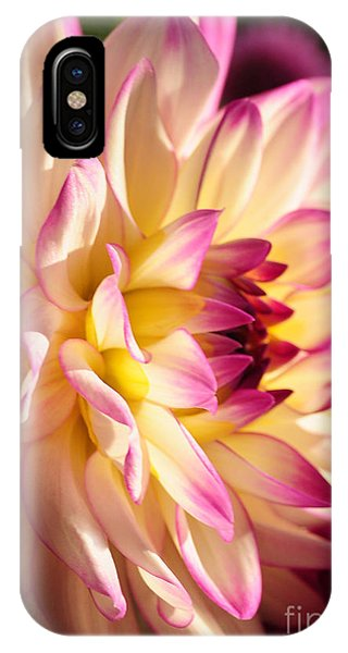 Pink Cream And Yellow Dahlia IPhone Case