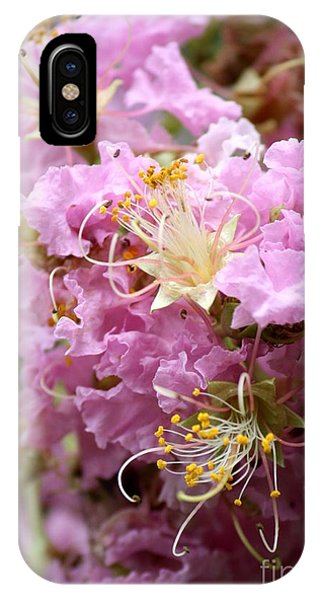 Deciduous iPhone Case - Pink Crepe Myrtle Closeup by Carol Groenen