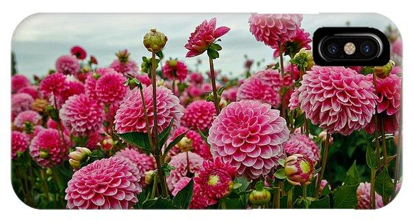 Pink Dahlia Field IPhone Case