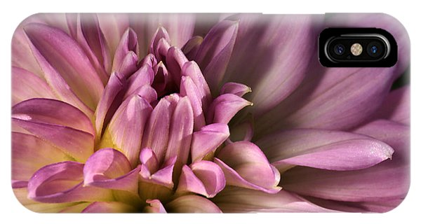 Pink Dahlia's Dream IPhone Case