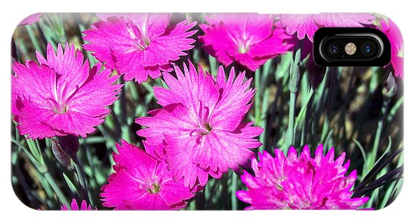 Pink Daisies IPhone Case