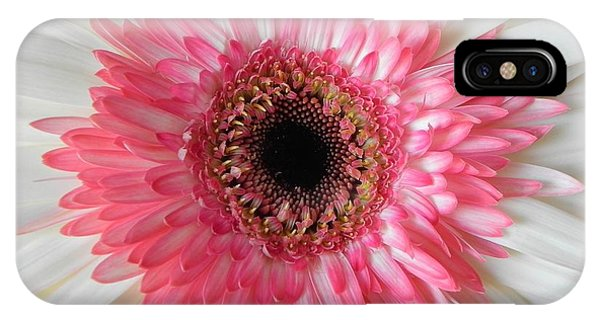 Pink Daisy Flower IPhone Case