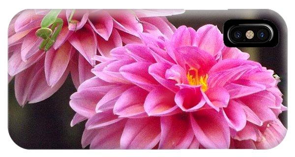 Pink Flower IPhone Case
