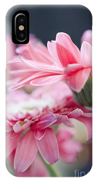 Pink Gerber Daisy - Awakening IPhone Case