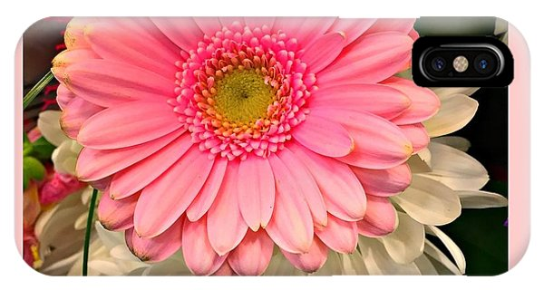 Pink Gerber Daisy IPhone Case