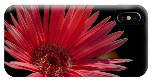It Professional iPhone Case - Pink Gerber Daisy by Renee Barnes