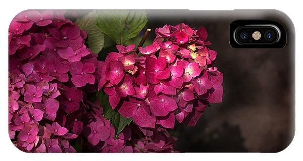 Pink Hydrangea Flowers In A Garden IPhone Case