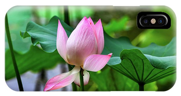 Aquatic Plants iPhone Case - Pink Lotus Blooming Lily Pads Close-up by William Perry