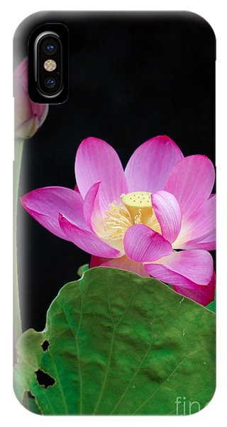 Pink Lotus Flowers IPhone Case