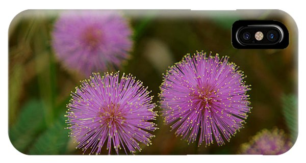 Pink Mimosa IPhone Case