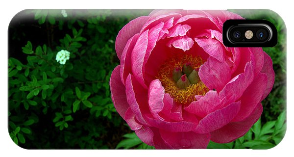 Pink Peony Colchester Vermont Phone Case by Mark Holden