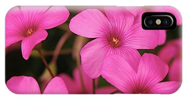Pretty Pink Phlox IPhone Case
