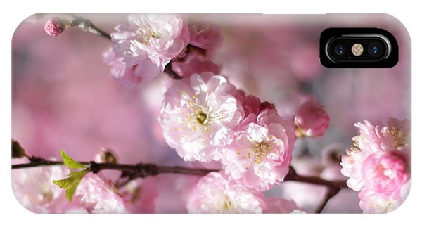 Pink Plum Branch 1 IPhone Case