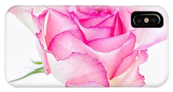 Pink Rose Glory IPhone Case