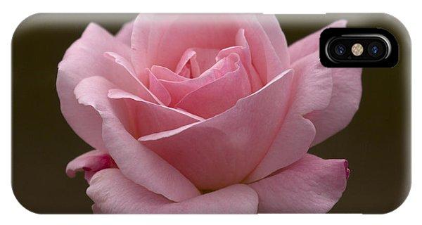 Pink Rose IPhone Case