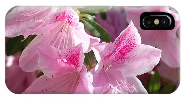 Pink Star Azaleas In Full Bloom IPhone Case