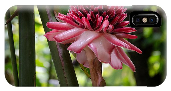 Pink Torch Ginger IPhone Case