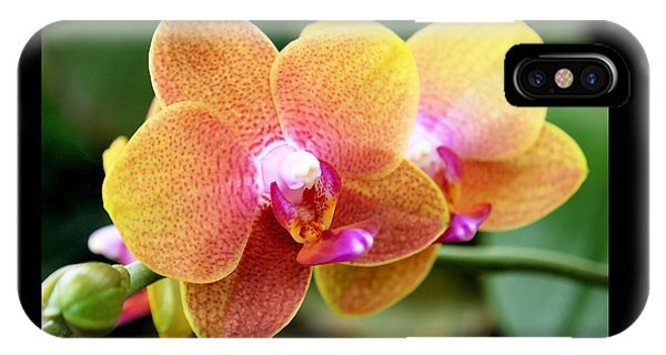 Pink Yellow Orchid IPhone Case