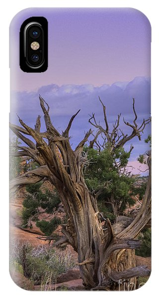 Pinon Pine IPhone Case
