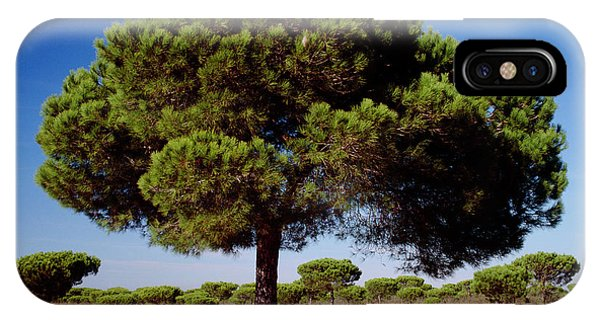 Umbrella Pine iPhone Case - Pinus Pinea by Andrew Brown/science Photo Library