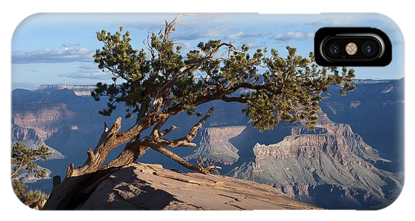 Pinyon IPhone Case