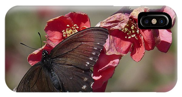 Pipevine Swallowtail And Roses IPhone Case