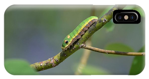 Pipevine Swallowtail Caterpillar IPhone Case