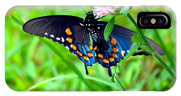 Pipevine Swallowtail Hanging On IPhone Case