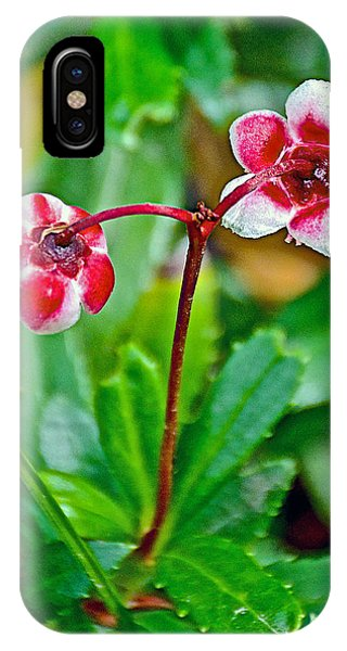 Scarlet Paintbrush iPhone Case - Pipsissewa On Trail To Swan Lake In Grand Teton National Park-wyoming by Ruth Hager