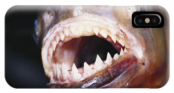 Piranha Teeth IPhone Case