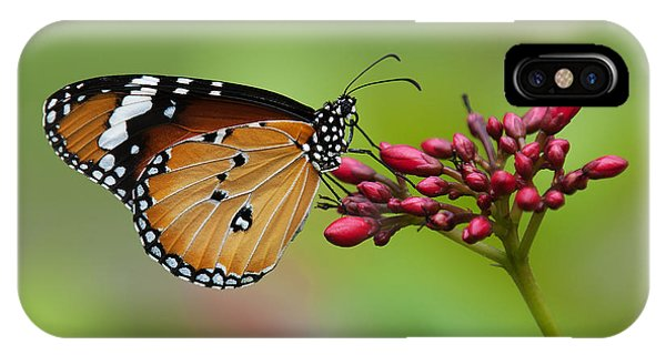 Plain Tiger Or African Monarch Butterfly Dthn0008 IPhone Case