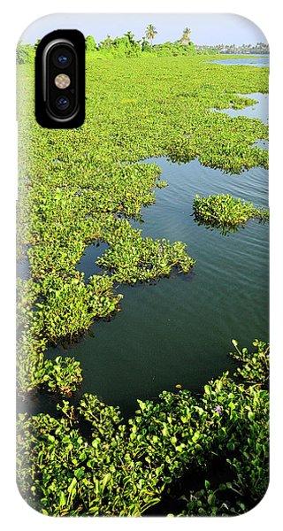 Roxbury iPhone Case - Plant Growth Along The Kumarakom by Steve Roxbury