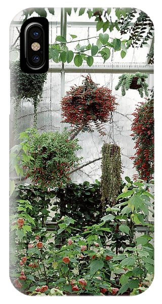 Plants Hanging In A Greenhouse IPhone Case