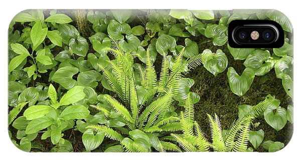 Colombia iPhone Case - Plants On A Forest Floor by Tony Craddock/science Photo Library