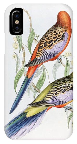 Parakeet iPhone Case - Platycercus Adelaidae From The Birds Of Australia by John Gould